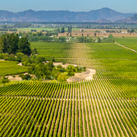 South American Wineries