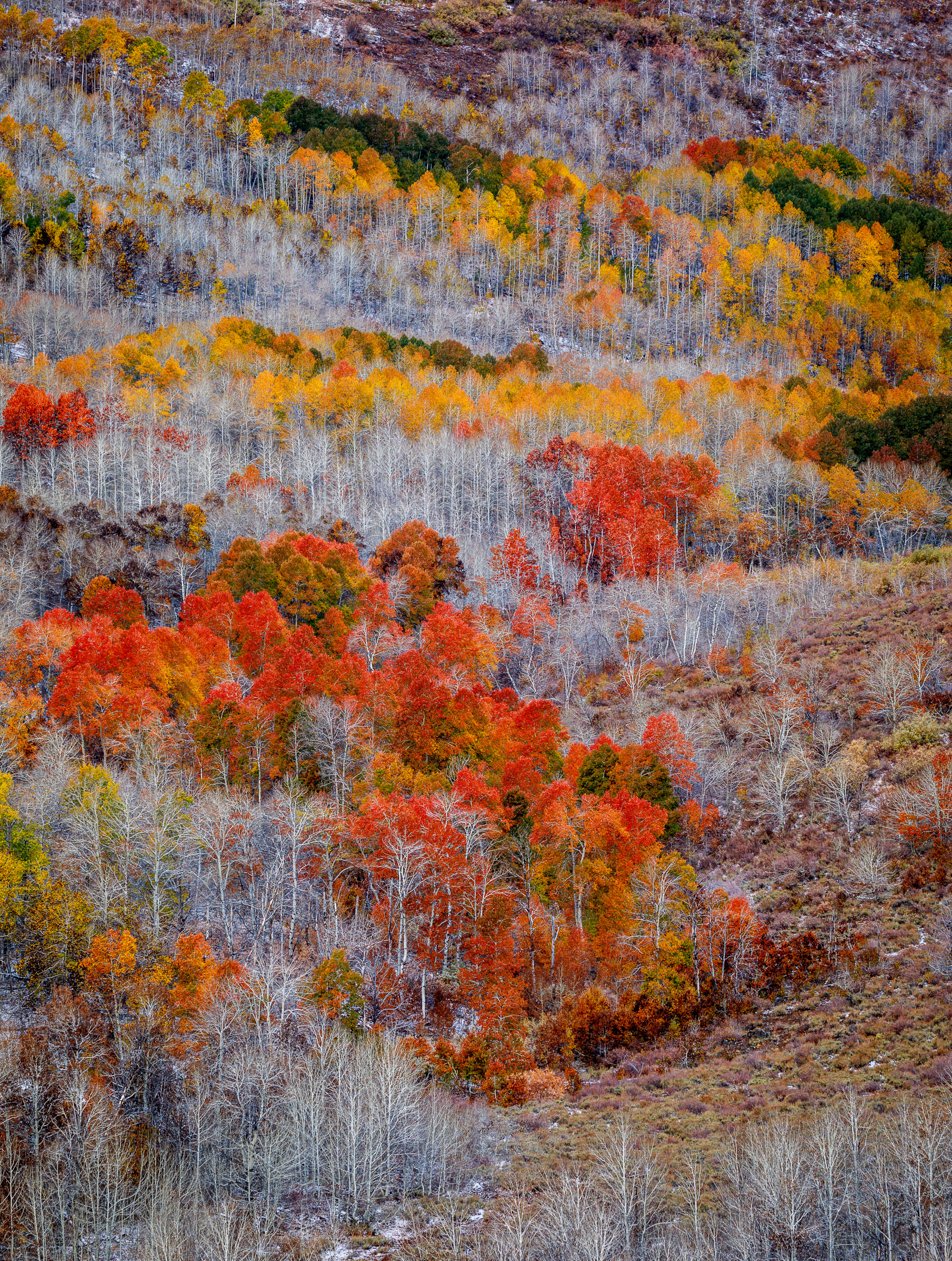Steens Mountain's Fish Creek Autumn Color