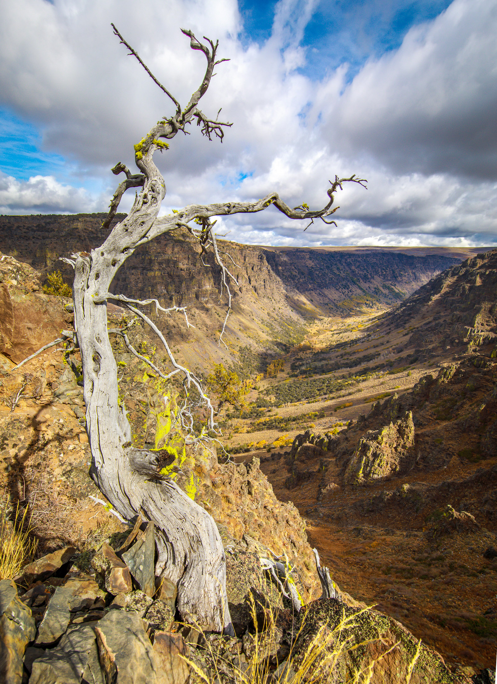 Steens Mountain's Little Blitzen Gorge